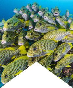 scuba diving El Nido