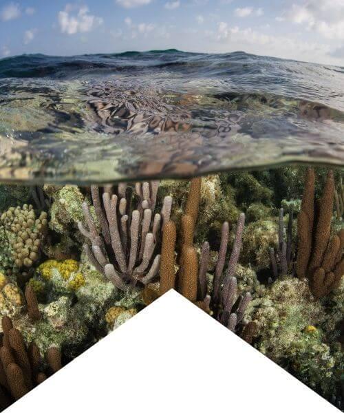 scuba diving moalboal