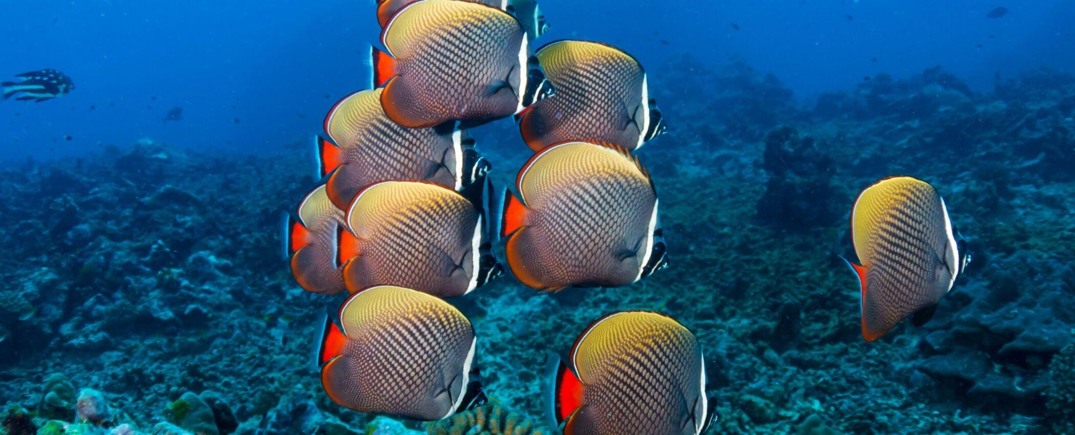philippines scuba