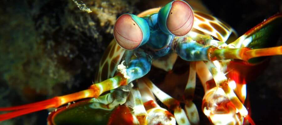 DSLR SCUBA Diving Camera