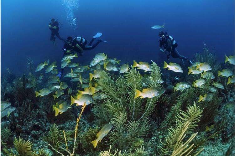 scuba diving cuba