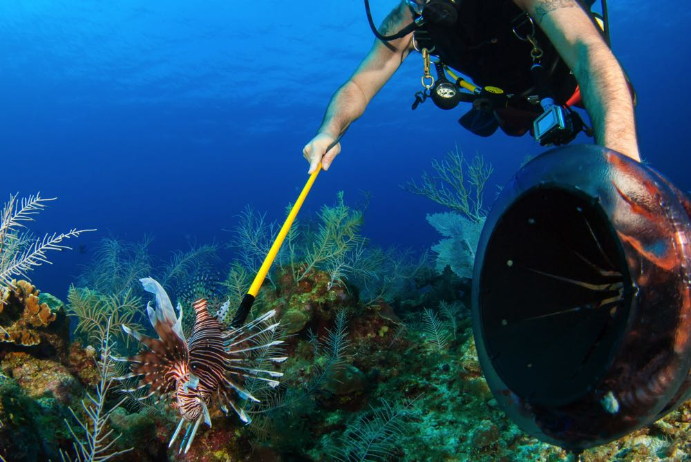 Hunting Lionfish In The Caribbean
