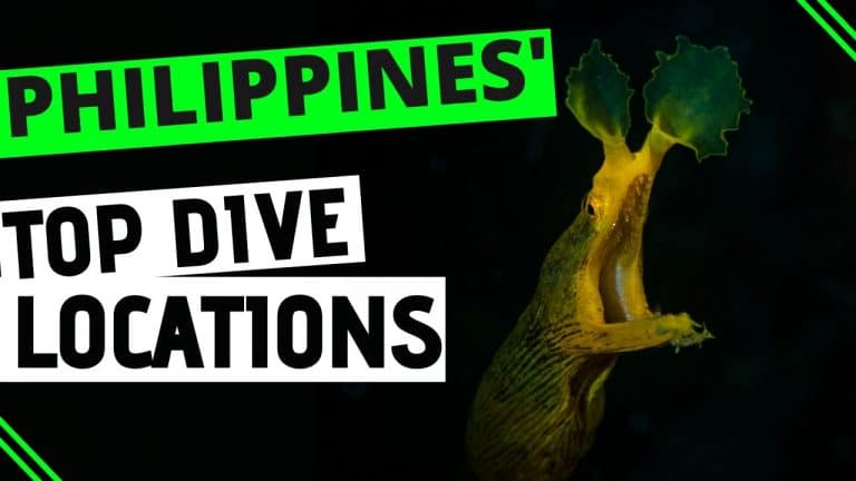 top dive locations in philippines