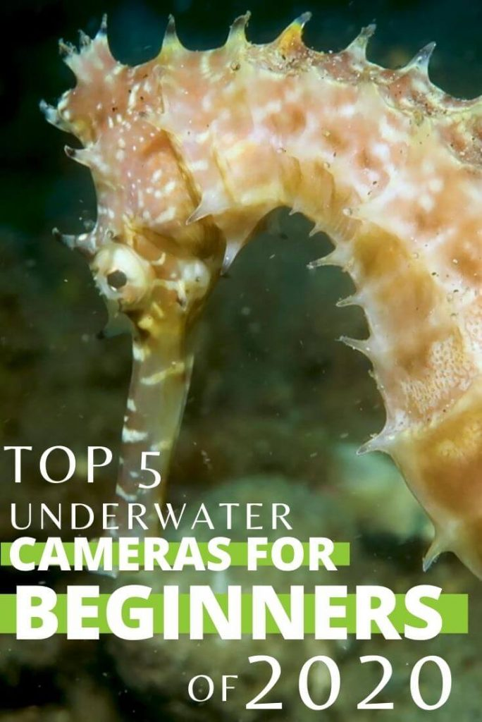 best diving cameras for beginners